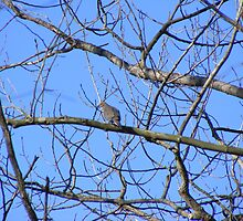 Lonesome dove    by joedog