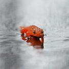 A Little Orange by vonnie1989