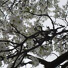 Spring in bloom by natnvinmom