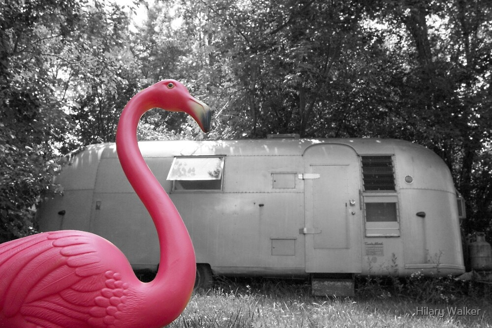 Pink Flamingo by Hilary Walker
