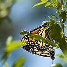 Butterfly Style by Donna Adamski