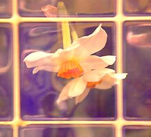 Daffodils on tiles by mikeloughlin