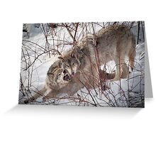 Timber Wolves Fighting Greeting Card