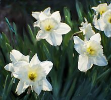 7 ABSTRACT DAFFODILS by pjm286