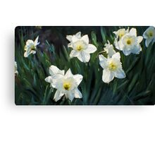 7 ABSTRACT DAFFODILS Canvas Print