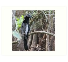 Alhinga Bird in the Everglades Florida Art Print