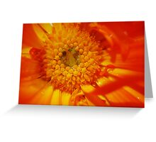 pollinate Greeting Card