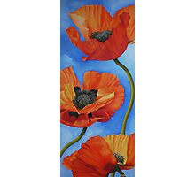Sky full of Poppies Photographic Print