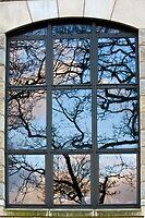 Window Tree by Karen Millard