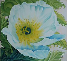 White Poppy Photographic Print