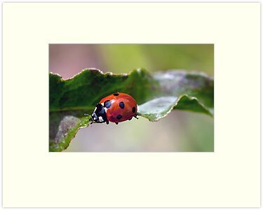 Ladybug Bridge by Bonnie T.  Barry