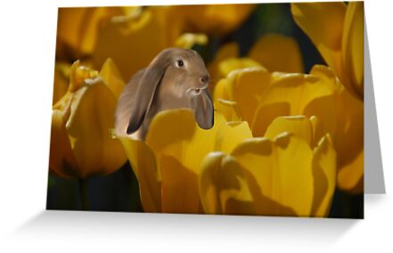 The Tulip Patch by Elaine  Manley