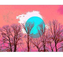 White blue Moon tree Photographic Print