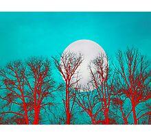 White moon tree Photographic Print