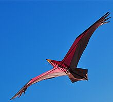 Flight of the Kite by Michael Tapping
