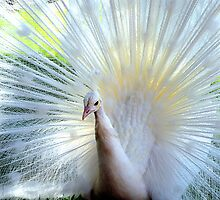 White Peacock by Angela Pritchard