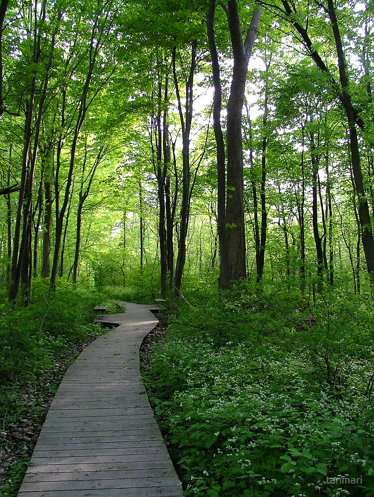 Spring in Point Pelee by tanmari
