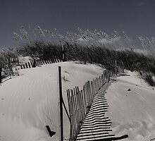 sand dune in black & white by leslie wood