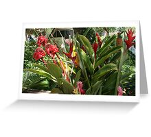 Tropic Color #5 Greeting Card