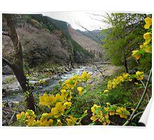 Mt. Mitake Valley, Japan Poster
