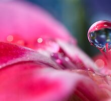Dignified Droplet by Jenni77