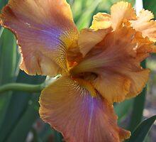 Topsy Turvy Iris by TxGimGim