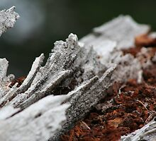 crimson bark by filthy-english