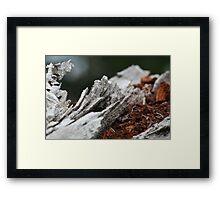crimson bark Framed Print