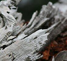 crimson bark 0.2 by filthy-english