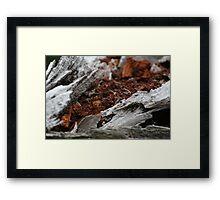 crimson bark 0.3 Framed Print
