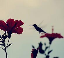 El Colibri by WoaH