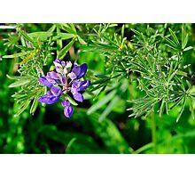 California Wildflowers – Marin Headlands Photographic Print