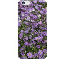 Brachycome iberidifolia iPhone Case/Skin