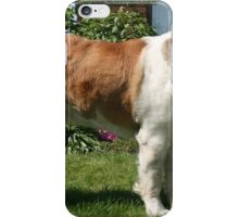 longhaired St. Bernard Dog iPhone Case/Skin