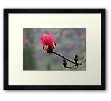 Shaving Brush Tree Flower Framed Print