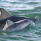 Port River Dolphins by Leeo