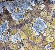 Pastel Rock Patterns by jacqi
