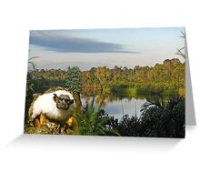 1181-Amazon Yoda Greeting Card