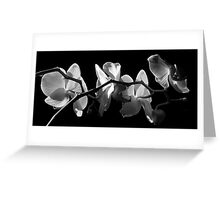 Ebony And Ivory ~ Part Two Greeting Card