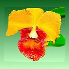 Yellow Orchid by Margaret Stevens