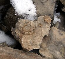fossils in Canadian Arctic by anibubble