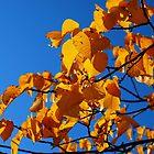 Autumn leaves by elaintahra