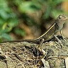 Gecko  by Rob Hawkins