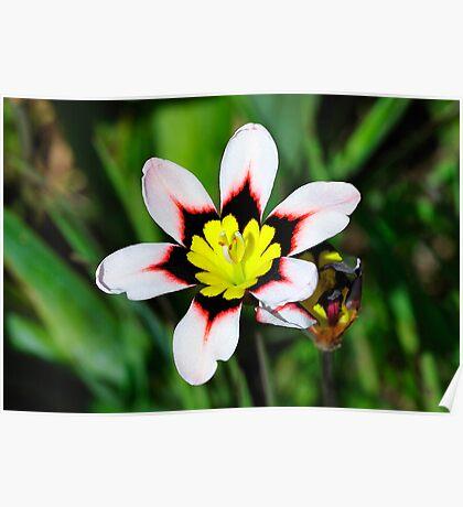 California Wildflowers • Marin Headlands  •  Series Poster