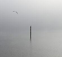 dream birds by yyyyssss