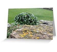 Lindisfarne Plantlife Greeting Card