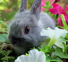 Blossoming Bunny Rabbit by Michael John