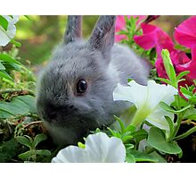 Blossoming Bunny Rabbit Photographic Print