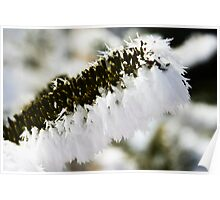 Pine with Snow Poster