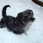 snow dog by DanniiD